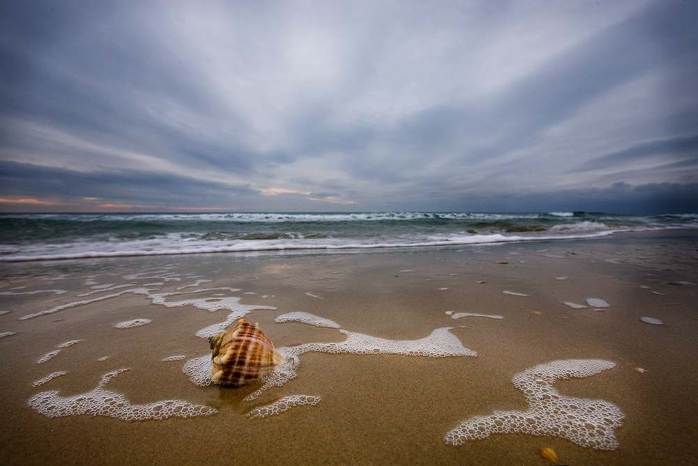"фото ""вспомнить лето..."" метки: пейзаж, лето, море, ракушка"