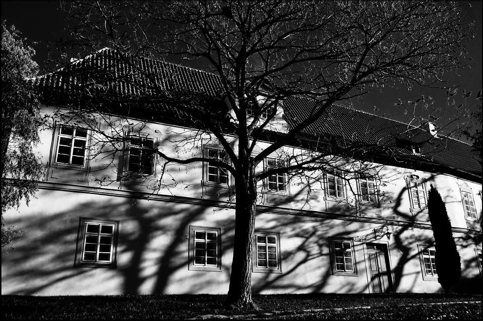 """фото """"Дерево и дом"""" метки: черно-белые, Prag, Praha, Прага"""