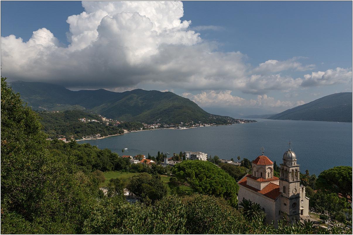 Флора черногории в картинках