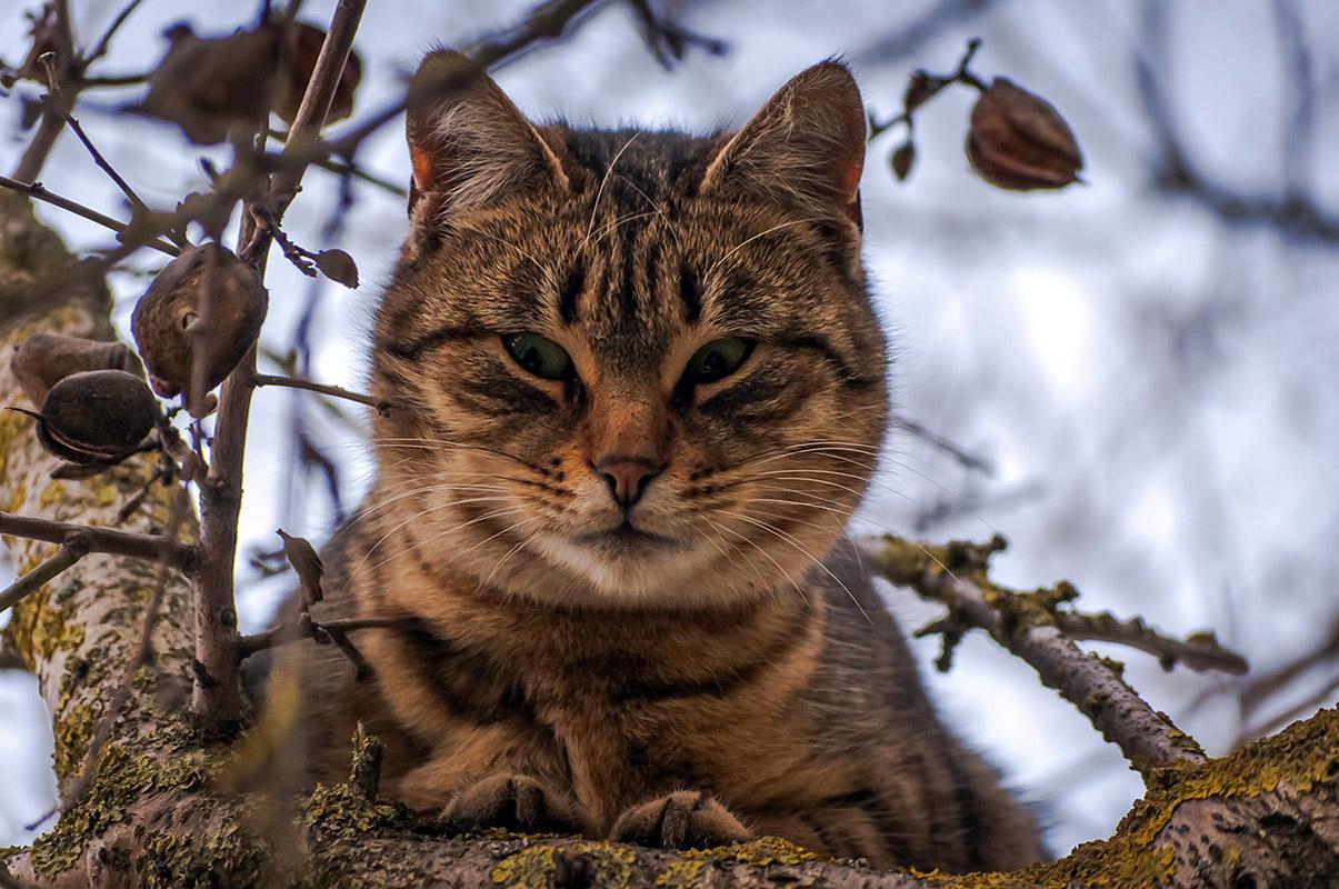 "photo ""***"" tags: nature, tomcat"