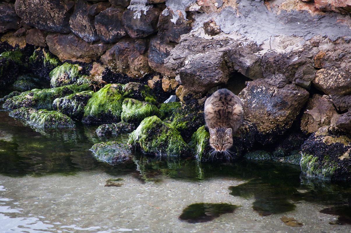 """фото """"кот на рыбалке"""" метки: природа,"""