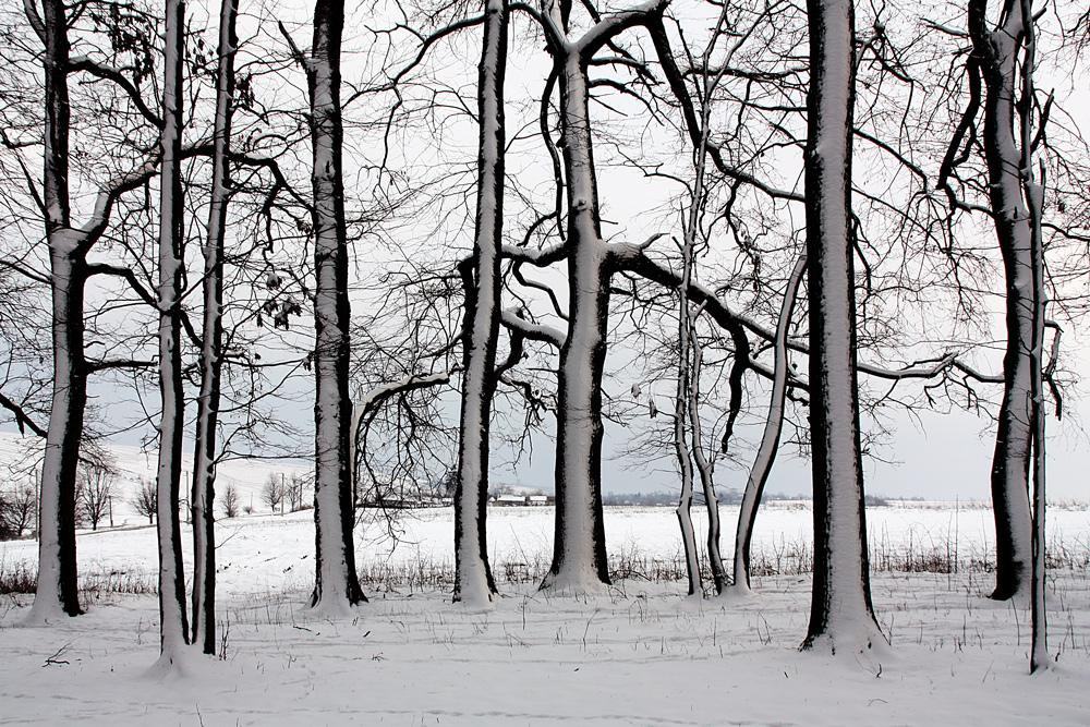 теплый пол зимние деревья фото черно белые последнее время бескаркасная