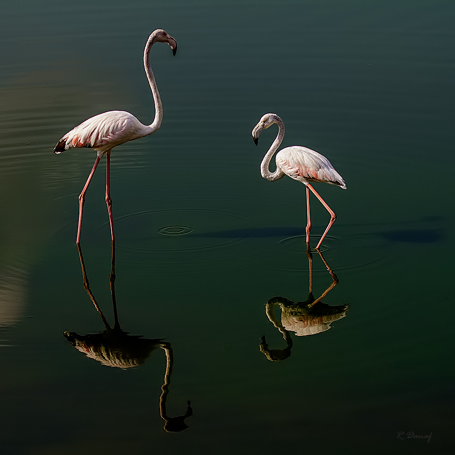 """photo """"Twin reflection"""" tags: nature,"""