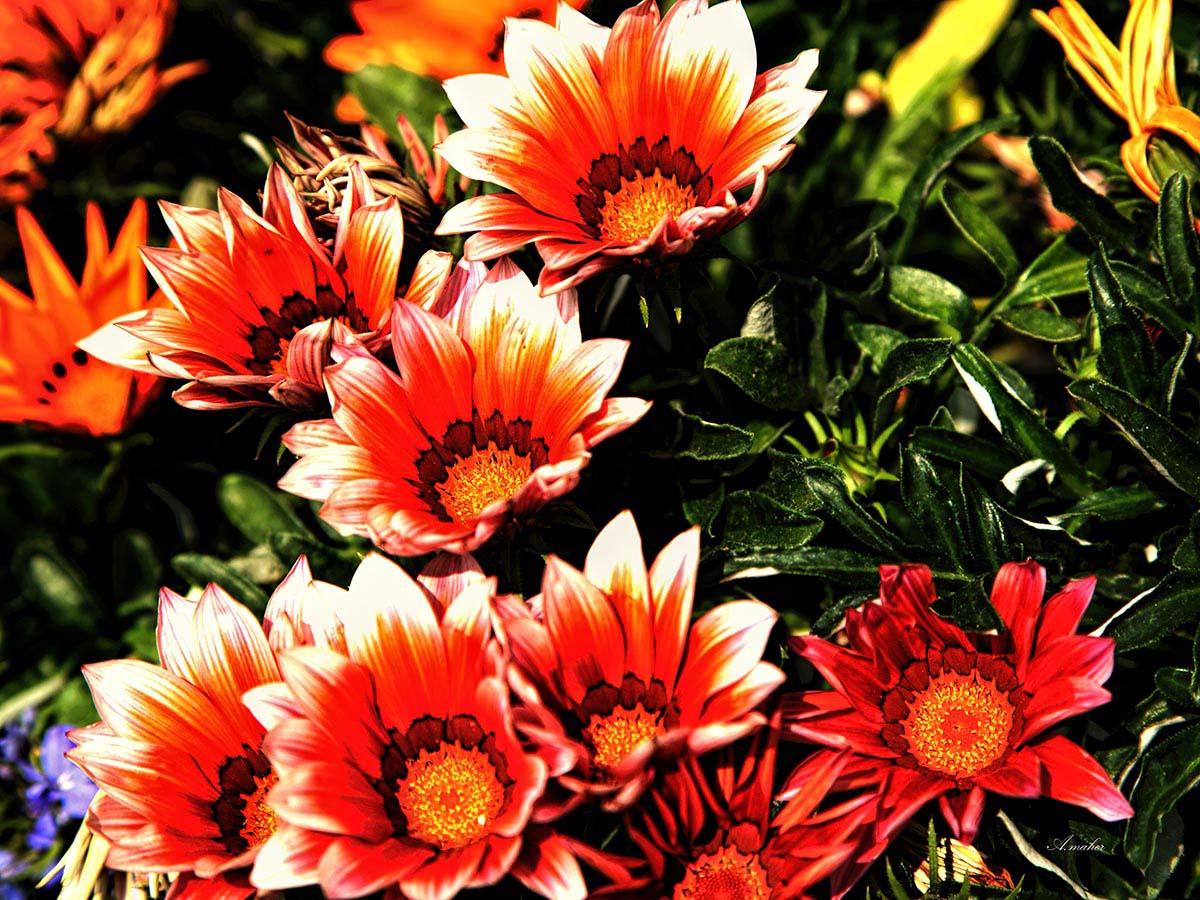 Искать по фото цветы