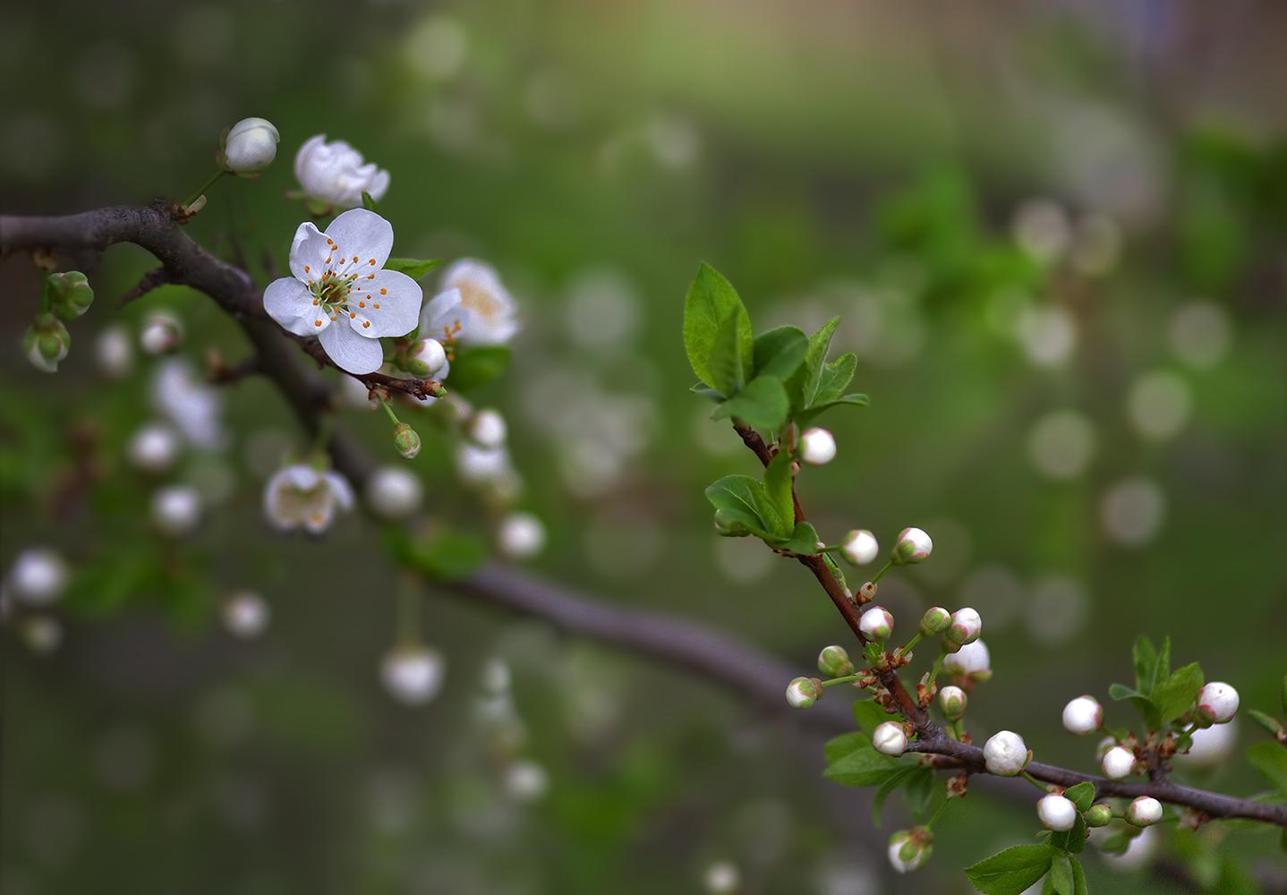 зеркала дыхание весны фото бывают слишком сложные