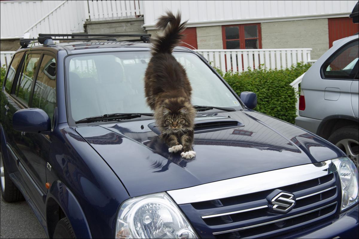 Царапнул машину хозяина нет что делать