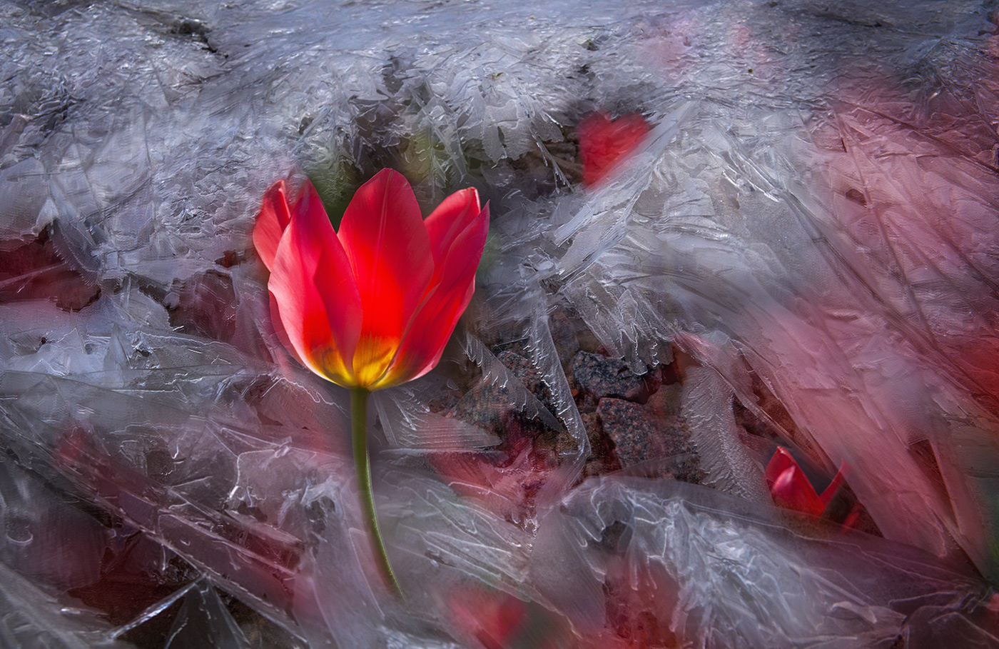 Лед и цветы картинки