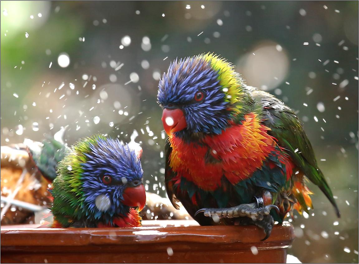 "фото ""Bathtime"" метки: путешествия, природа,"