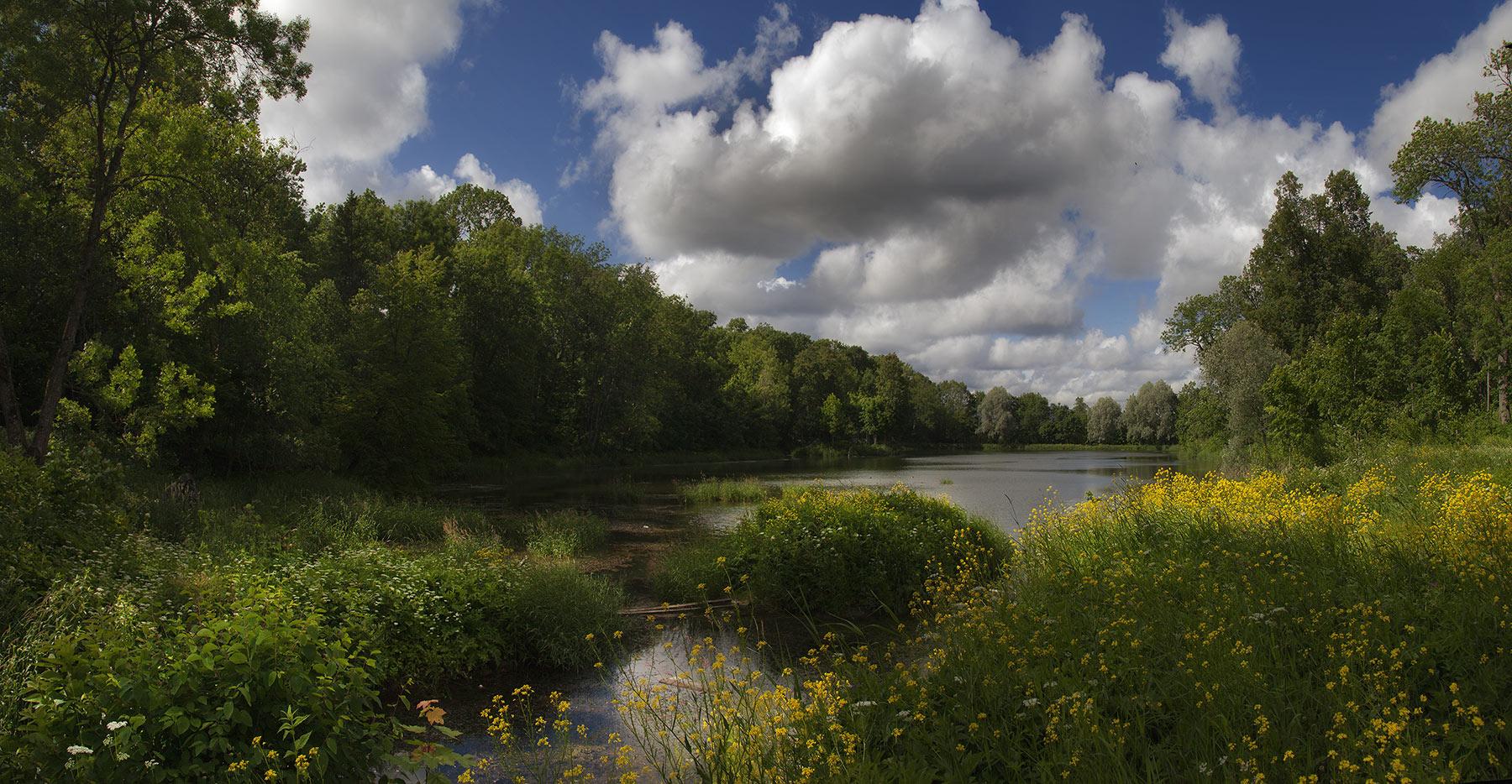 "фото ""О контрастах лета"" метки: пейзаж, природа, берег, облака, пруд, солнце, цветы"