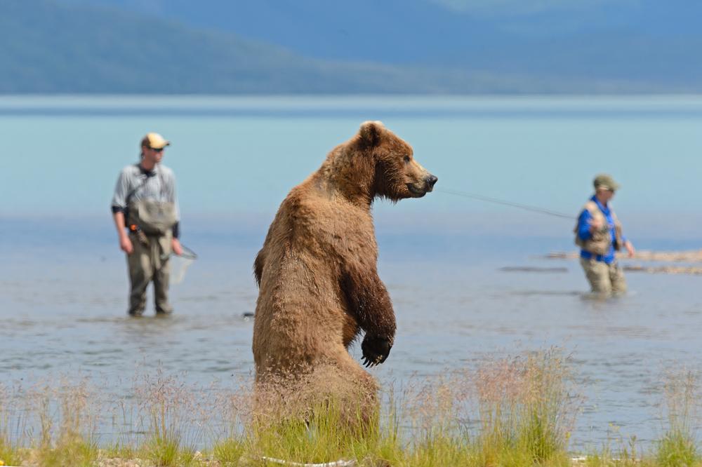 кого ловит медведь