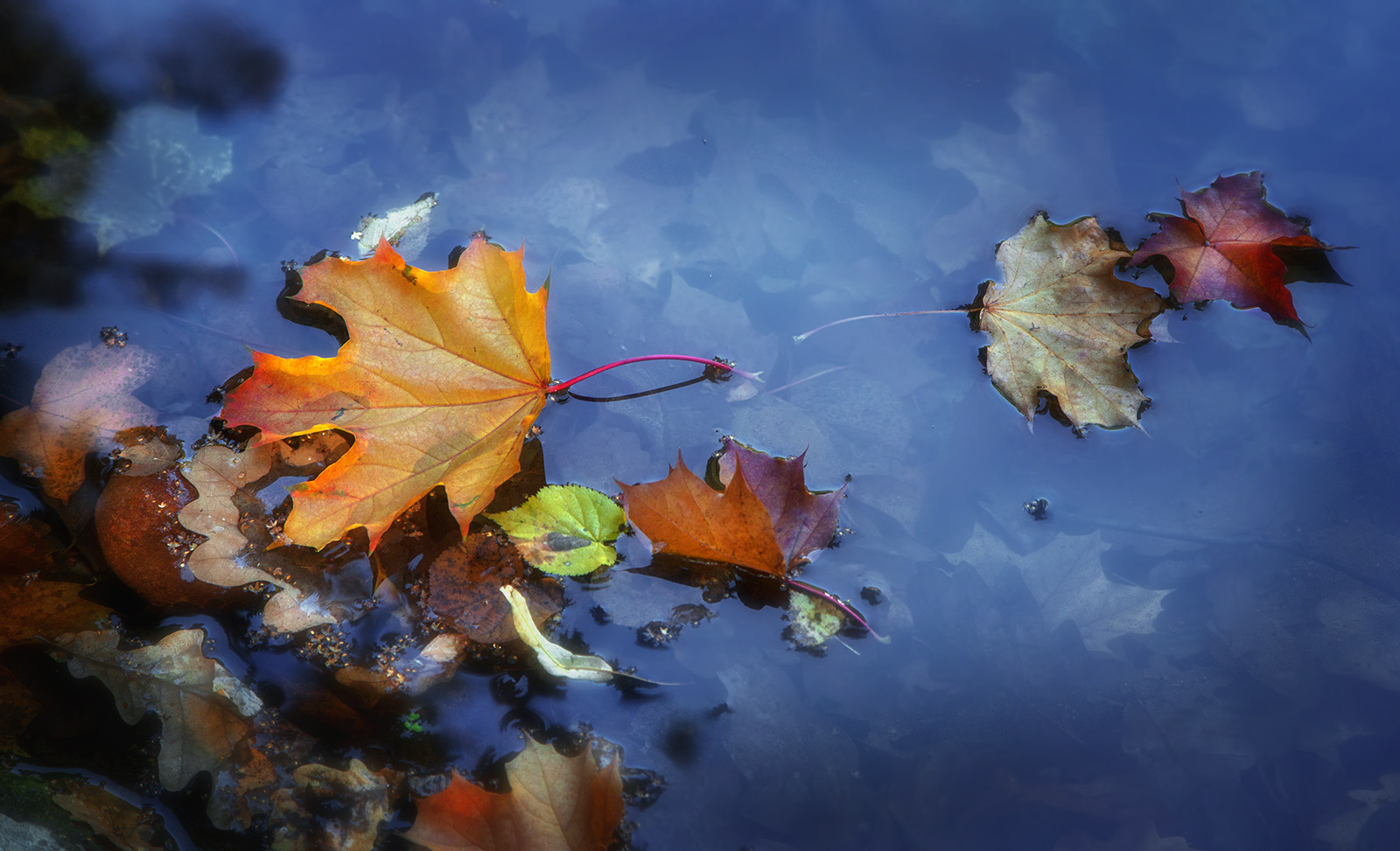 """photo """"***"""" tags: nature, macro and close-up, pond, лтстья"""