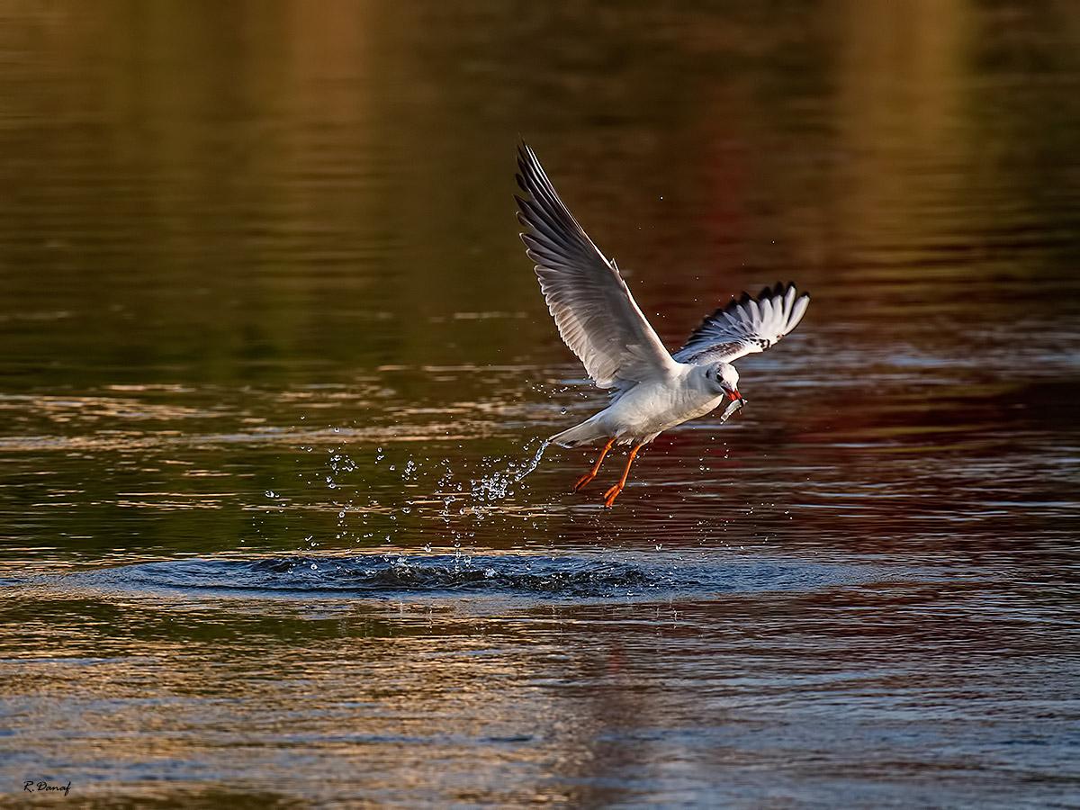 "фото ""The catch 2"" метки: природа,"