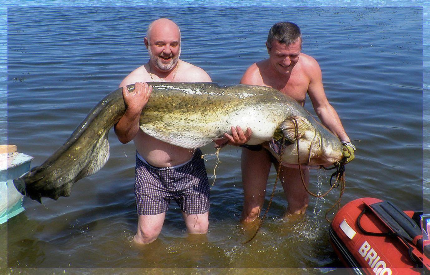 сонник рыбалка сом