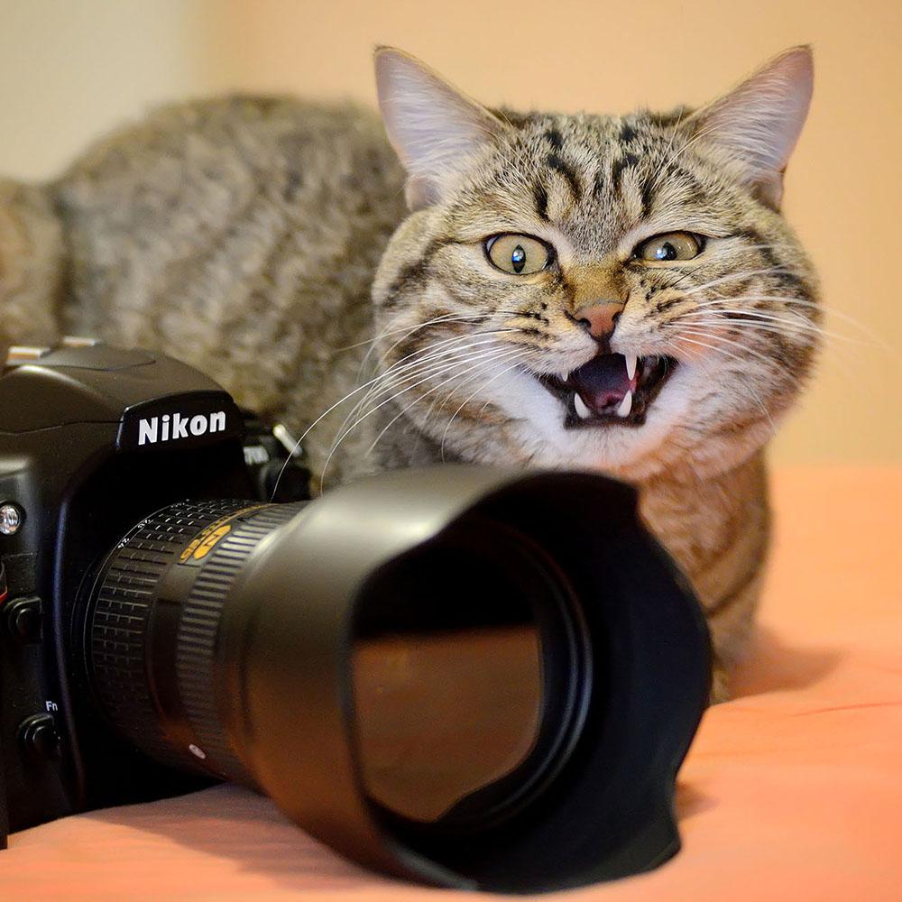 фотосессия фото смешного фотоаппарата раз пришли телецентр