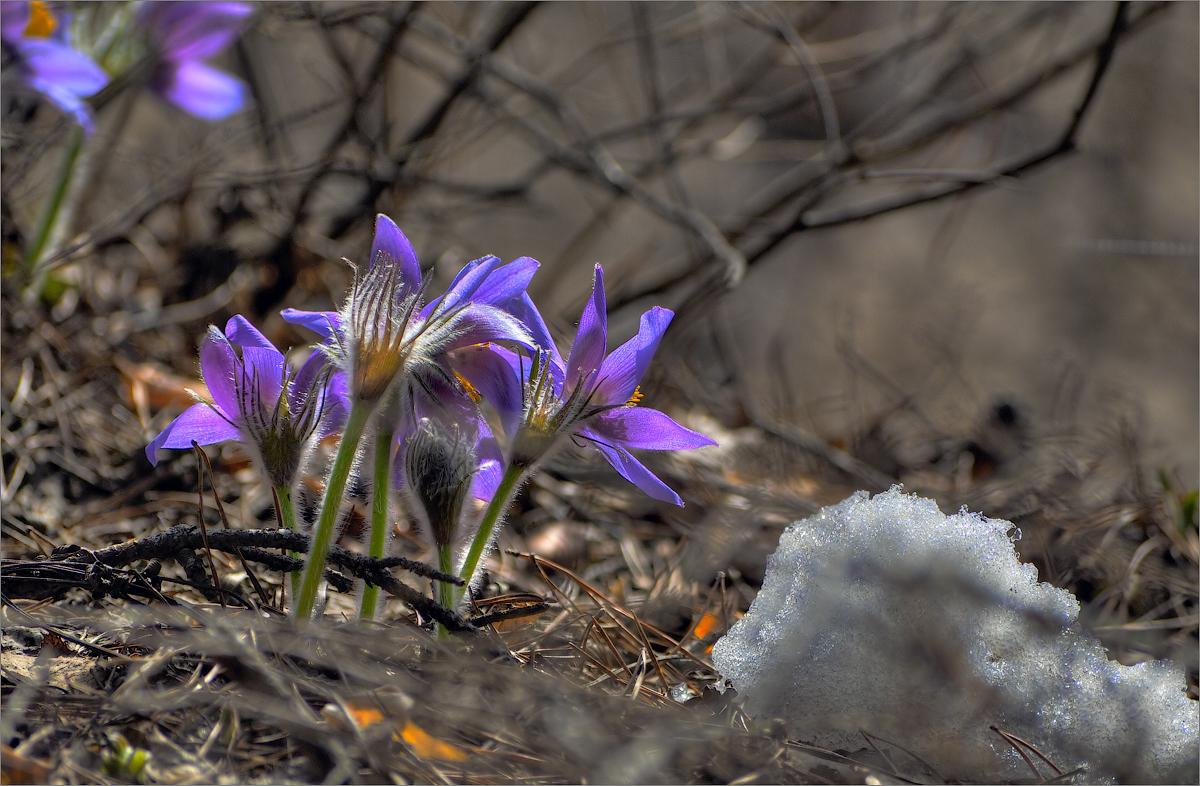Весна в россии картинки детям серьги