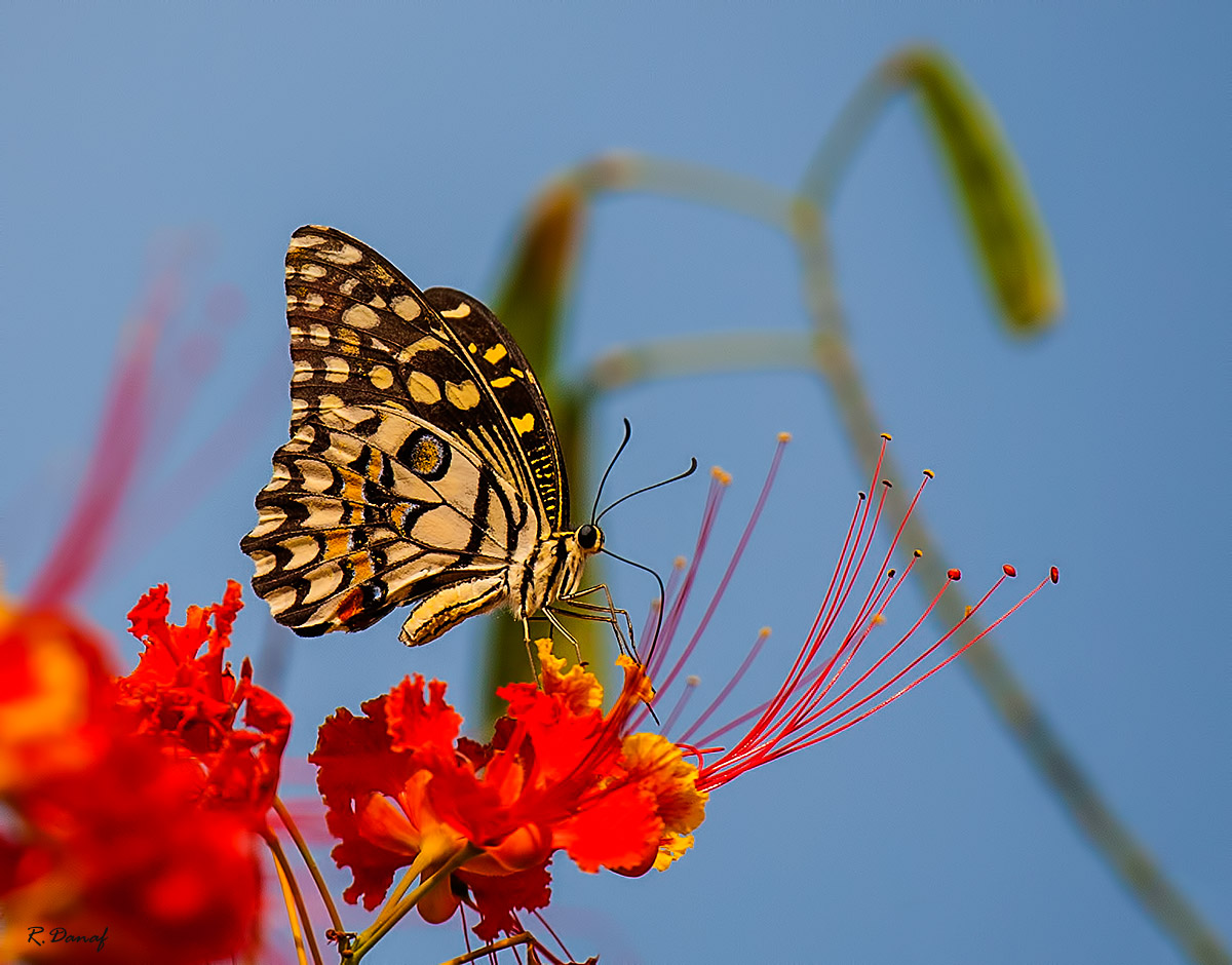 "photo ""Butterfly"" tags: nature, macro and close-up,"