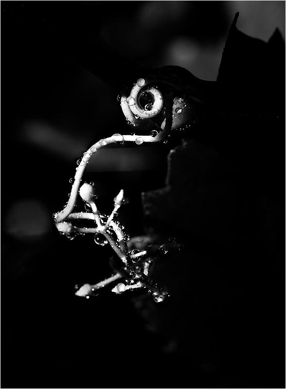 чёрно-белые крутые картинки