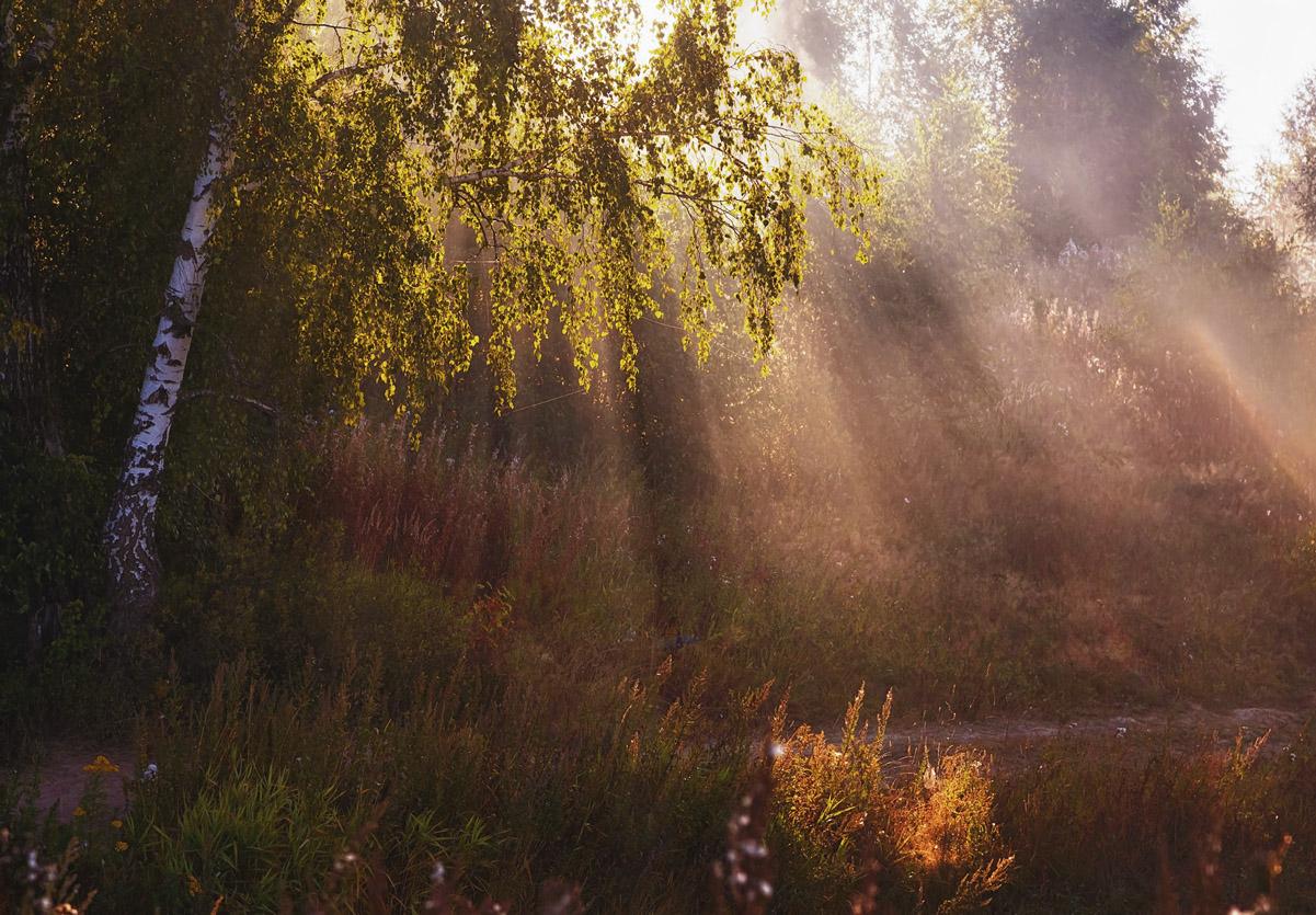 короб, находящийся тонирование теплого осеннего фото с лучами солнца песне