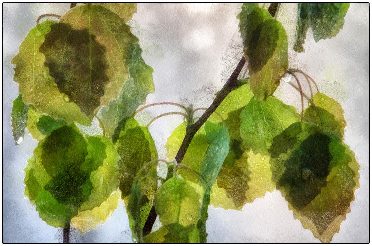 "photo ""after rain"" tags: nature, digital art,"