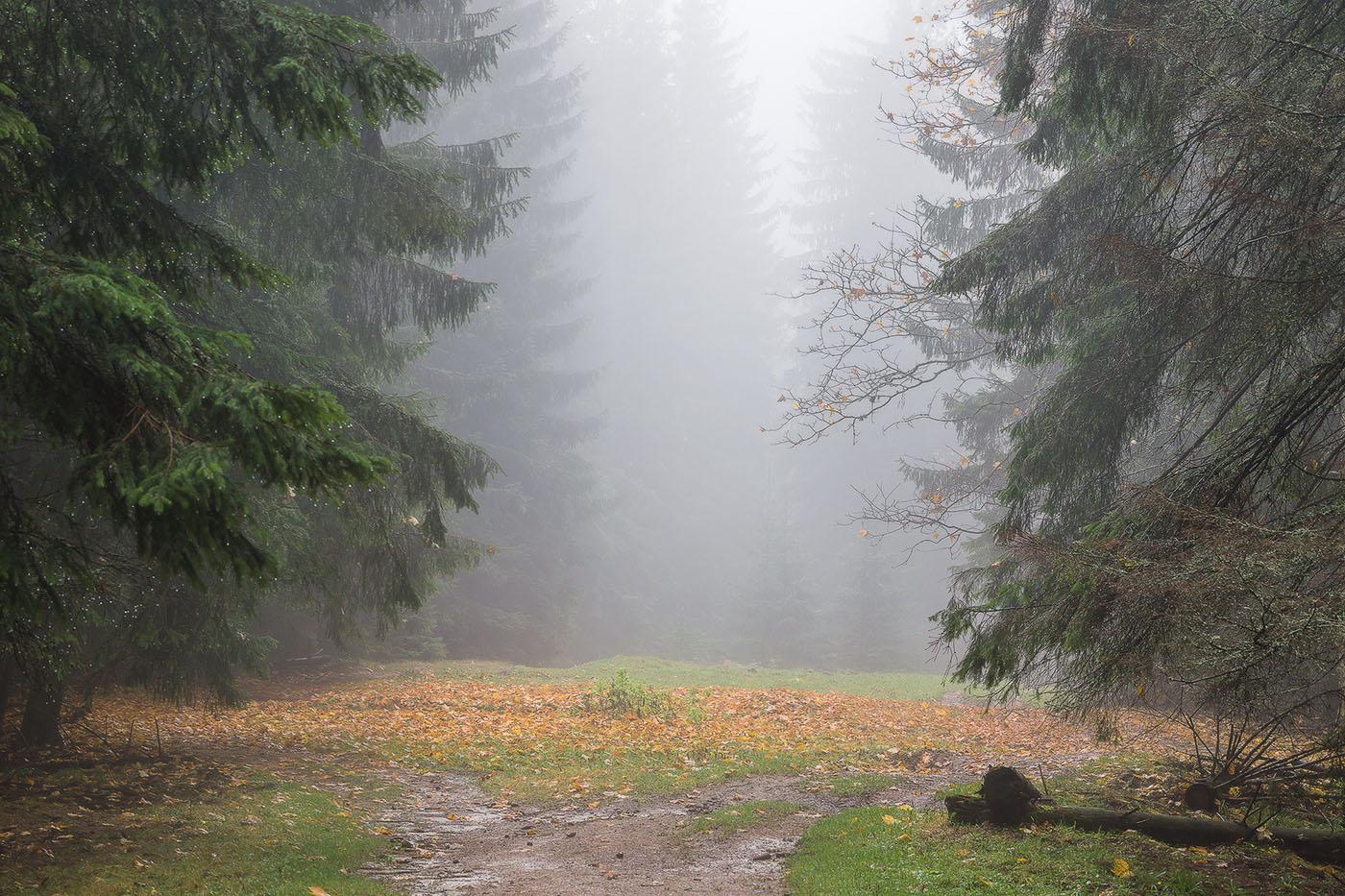 "photo ""***"" tags: landscape, nature, Ukraine, autumn, fog, forest, mountains, rain, Карпаты"