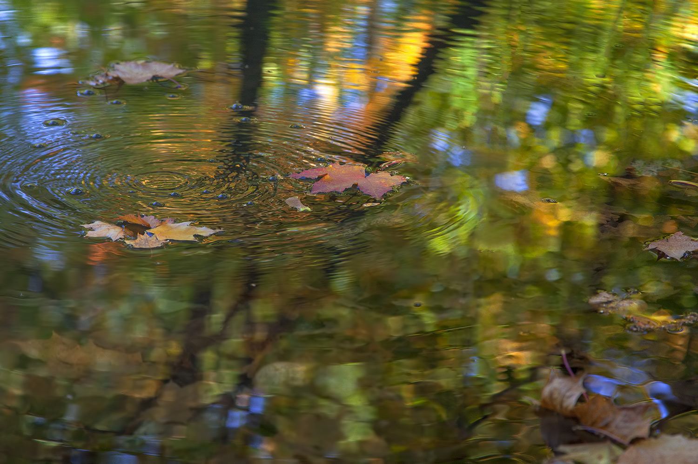 """фото """"Крадущаяся Осень..."""" метки: природа, макро и крупный план,"""