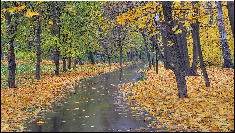"""photo """"the autumn avenue in park"""" tags: city, landscape, nature,"""