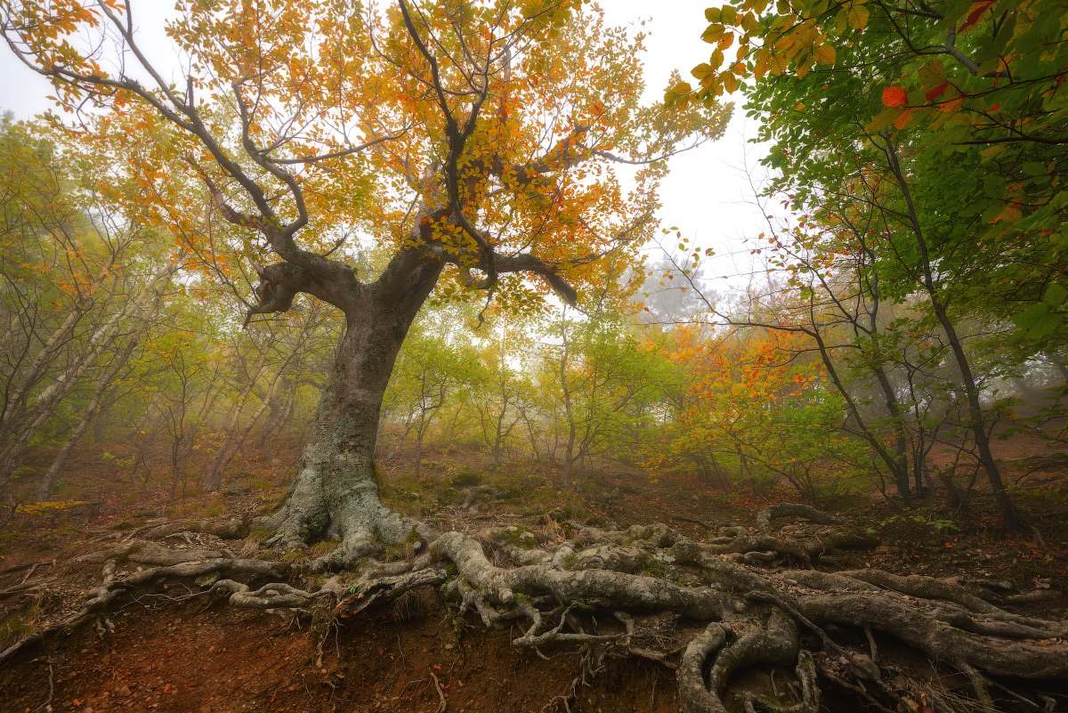 "photo ""***"" tags: landscape, travel, nature, Crimea, Russia, autumn, fog, forest, mountains, tree, демерджи, склоны"