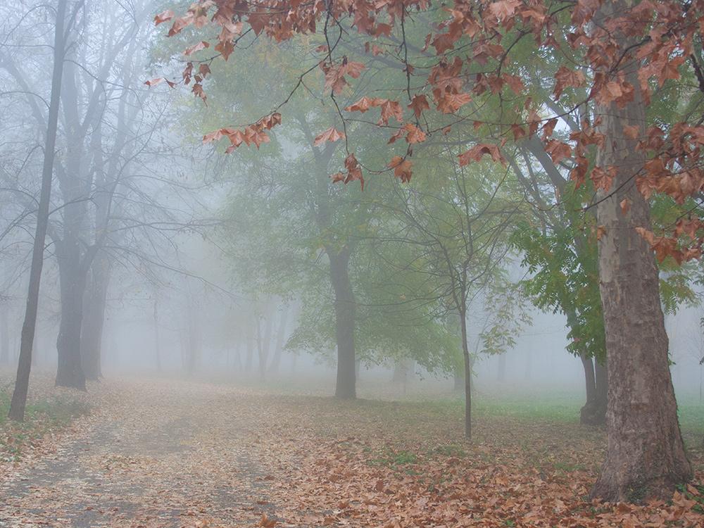 """фото """"Осенние контрасты"""" метки: пейзаж,"""