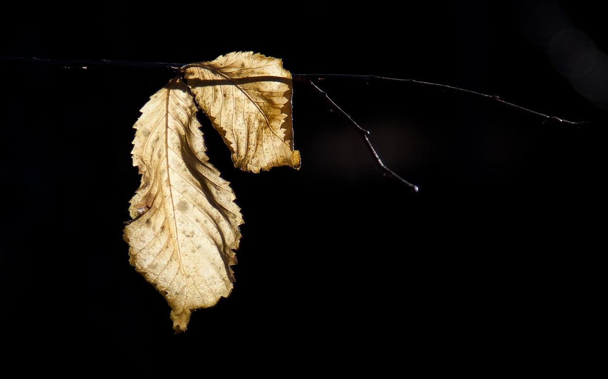 """photo """"autumn"""" tags: nature,"""