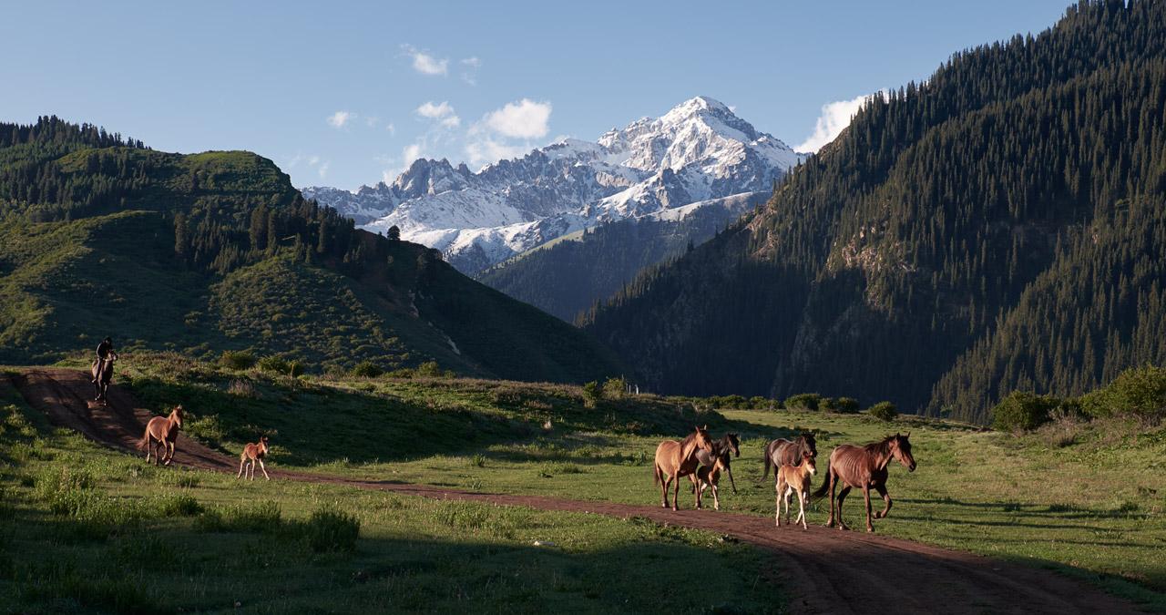 "photo ""***"" tags: landscape, travel, nature, Asia, mountains, summer, Восход, киргизия, лошади"