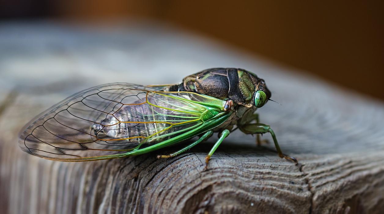 """фото """"Новорожденный"""" метки: макро и крупный план, Северная Америка, лето, насекомое"""