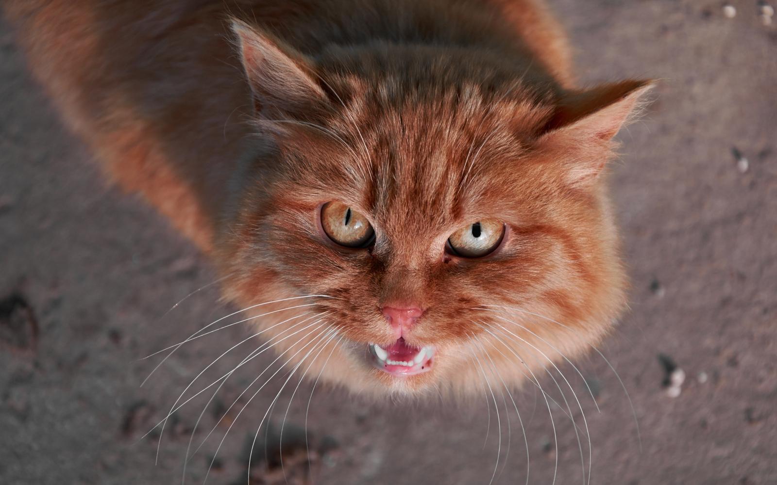 нервная кошка картинка все девушки сталкиваются