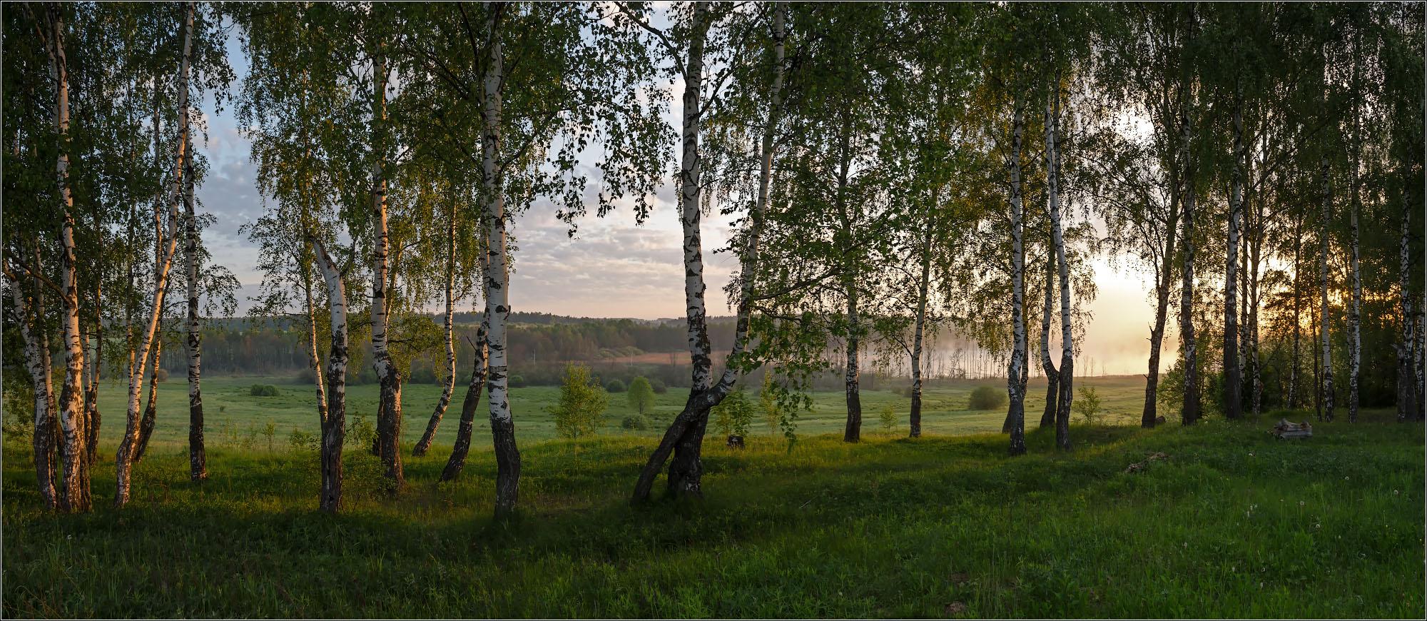 "photo ""***"" tags: landscape, nature, birches, morning, summer, июнь, солнечно"
