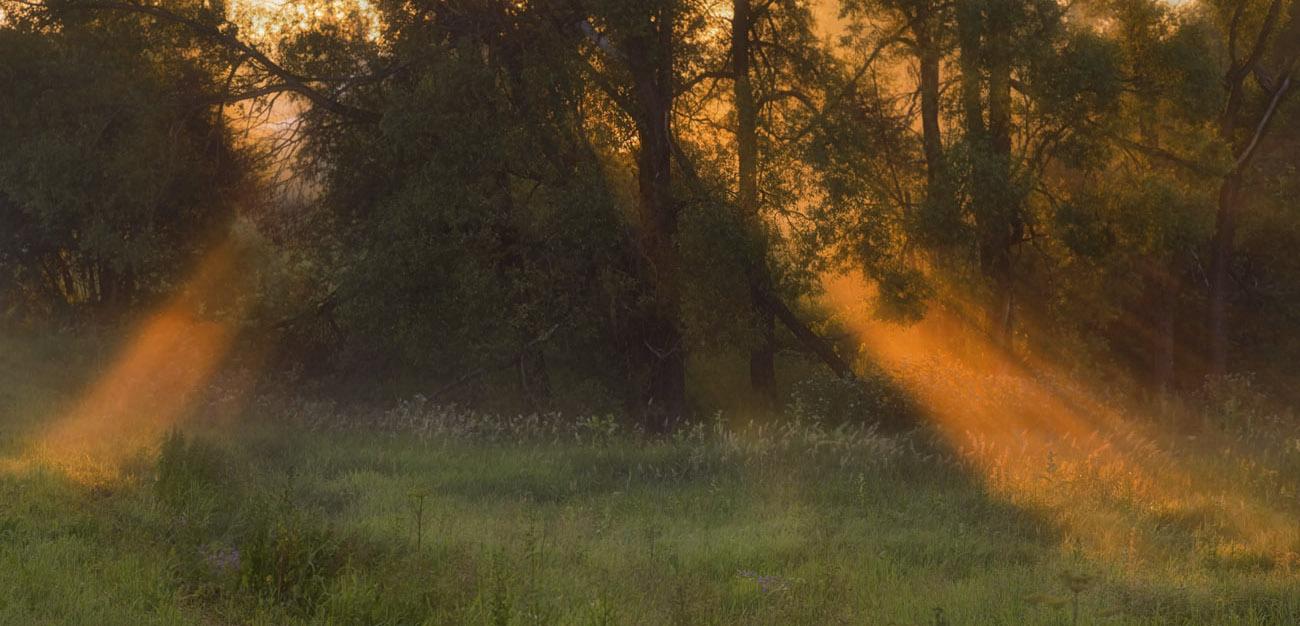 "фото ""Светопись рассвета"" метки: панорама, пейзаж, природа, лучи Солнца, поляна в лесу, рассвет, светопись рассвета, туман, утро"