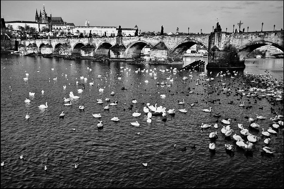 "photo ""Пражский Град, Карлов мост и Влтава"" tags: black&white, city, architecture, Prag, Prague, Praha, Место фотографирование"