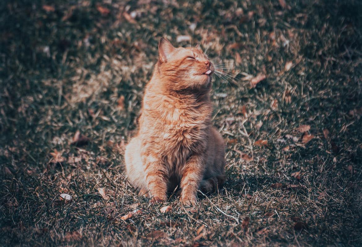 "photo ""orange cat"" tags: misc., nature, cat, tomcat, животное, коты, котэ, кошки"
