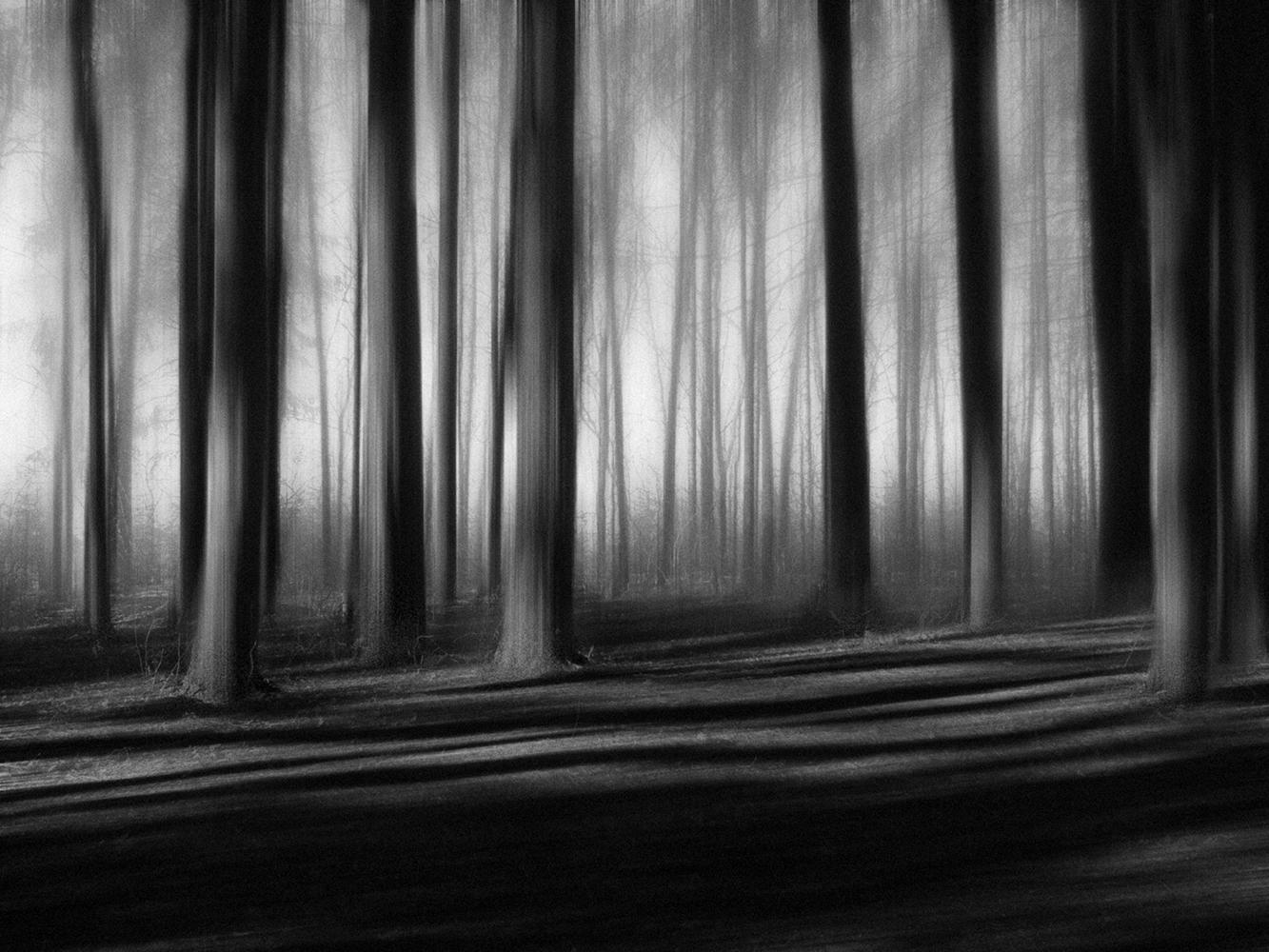 "photo ""***"" tags: nature, black&white, digital art, forest, деревья, монохром"