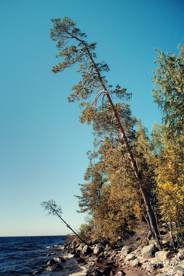 "photo ""somewhere in Karelia"" tags: misc., nature, landscape, Karelia, autumn, island, lake, tree, water"