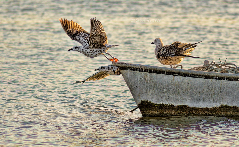 Картинки лодки чайки