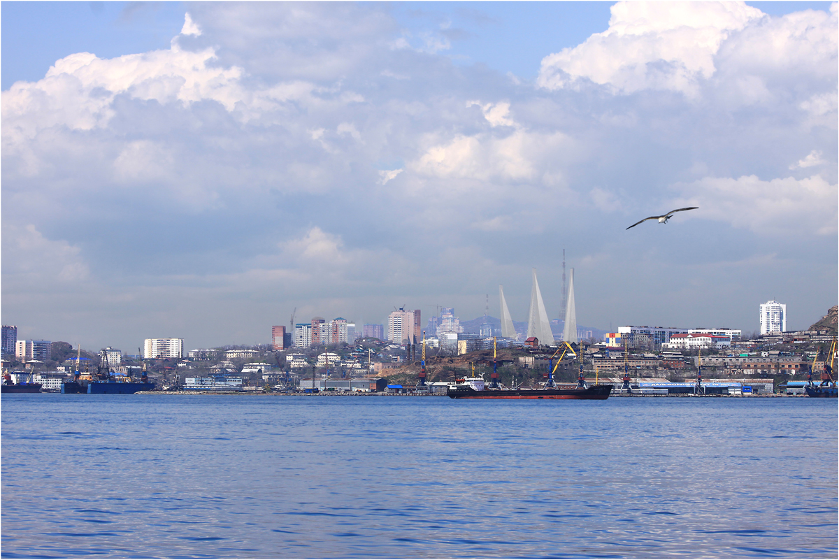 Тигрят маленьких, владивосток картинки города и море