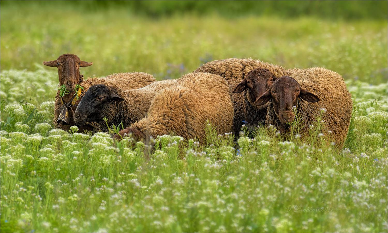 "photo ""Retrato de grupo"" tags: nature, Europe, flowers, pets/farm animals, spring"