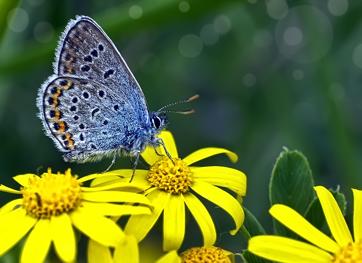 """photo """"***"""" tags: macro and close-up, nature, butterfly, макро"""