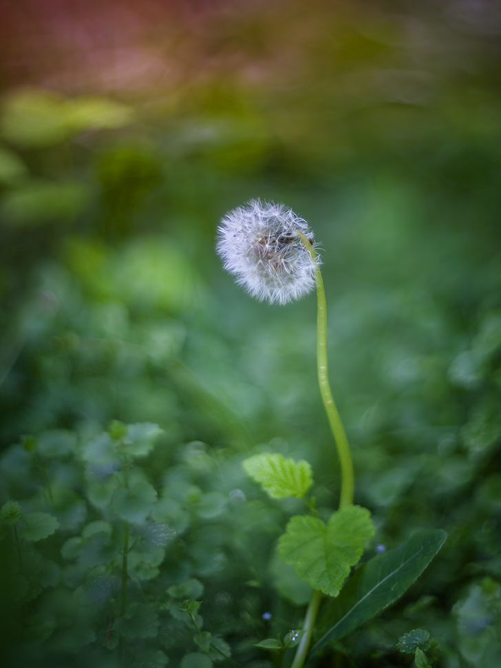 """photo """"***"""" tags: macro and close-up, nature,"""