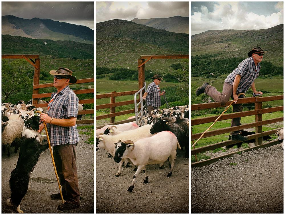 "photo ""Somewhere in Ireland ..."" tags: travel, reporting, Ирландия, овцы, пастух, собаки"