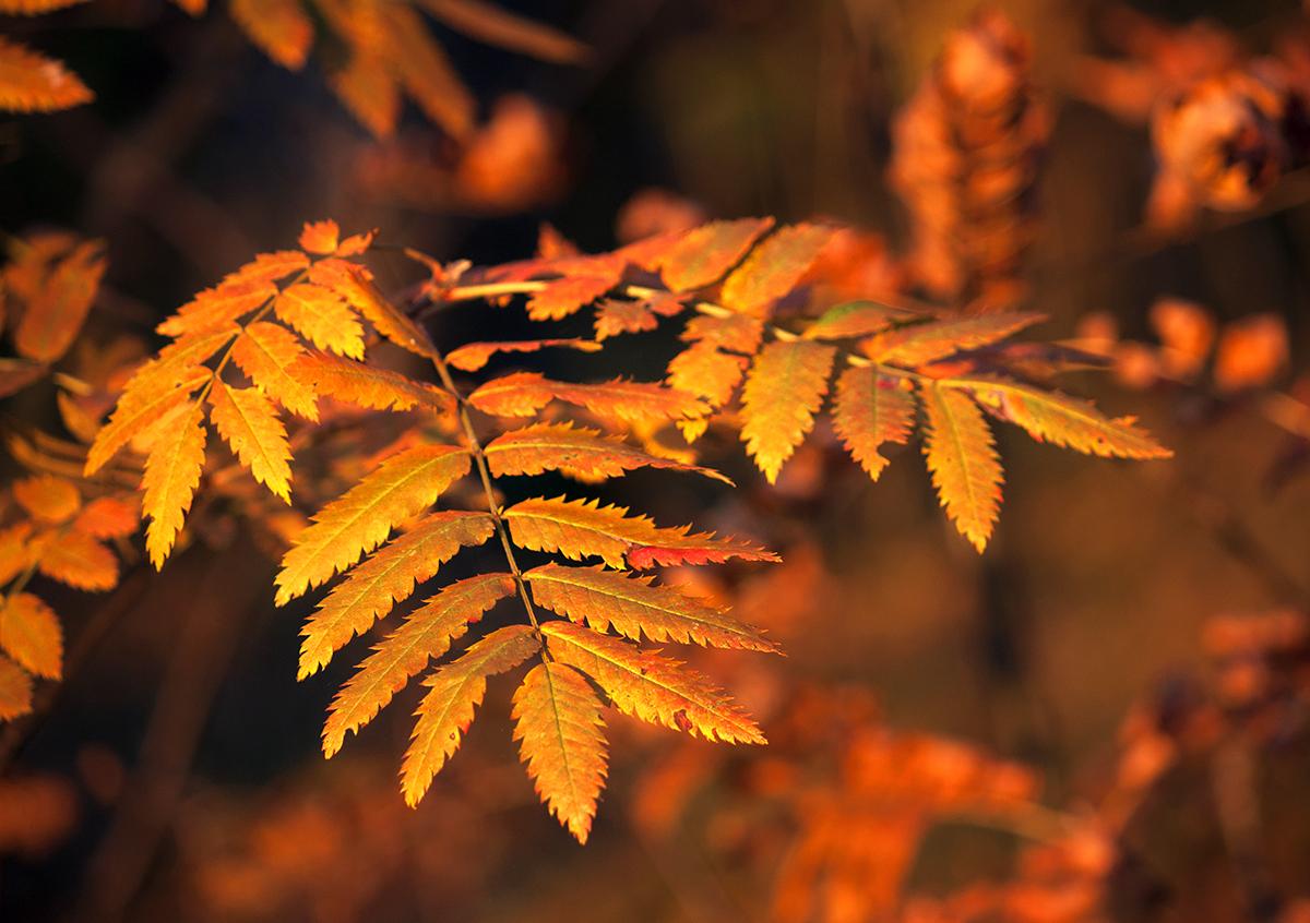 """photo """"***"""" tags: nature, autumn"""