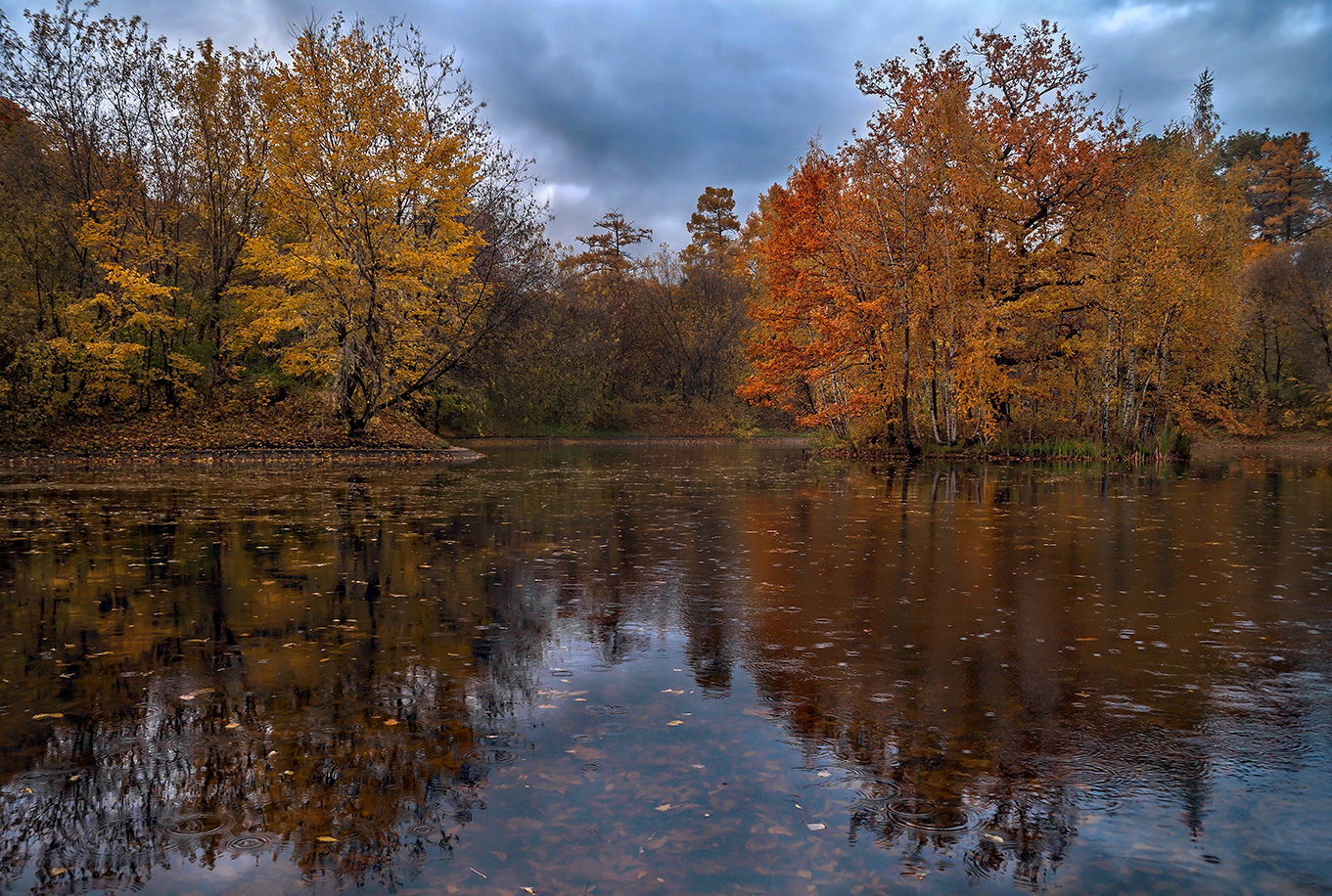 Осенний лес в дождь картинки