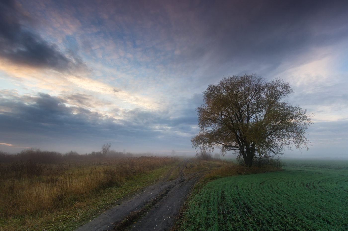 "photo ""***"" tags: landscape, autumn, field, fog, road, sunrise, tree, тишина"
