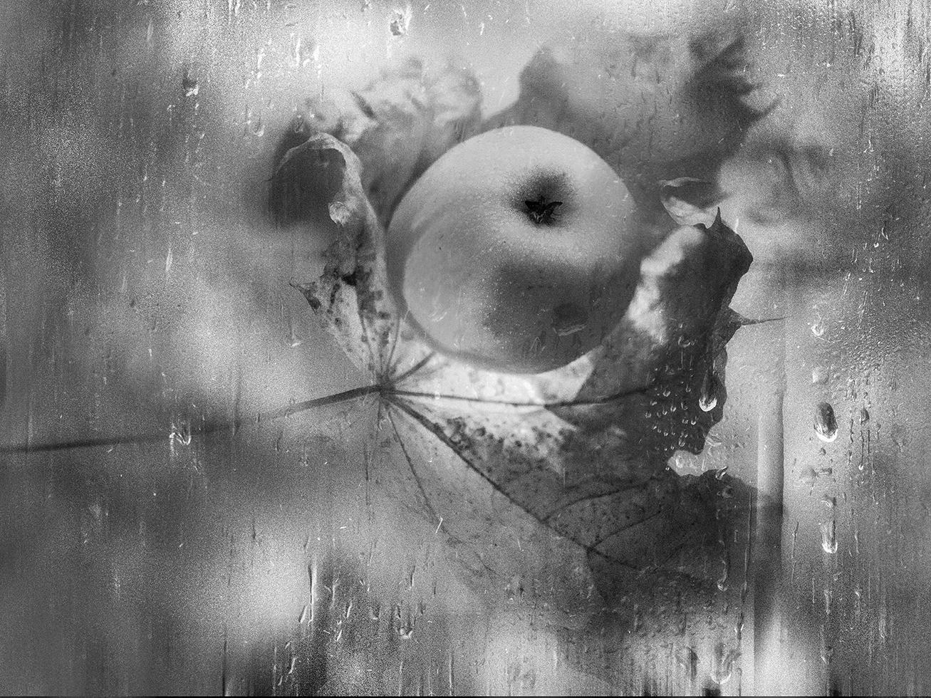 "фото ""На ладони осени"" метки: натюрморт, макро и крупный план,"