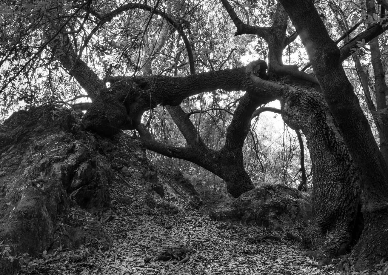 "photo ""Ворота к Свету."" tags: landscape, black&white, forest, tree"