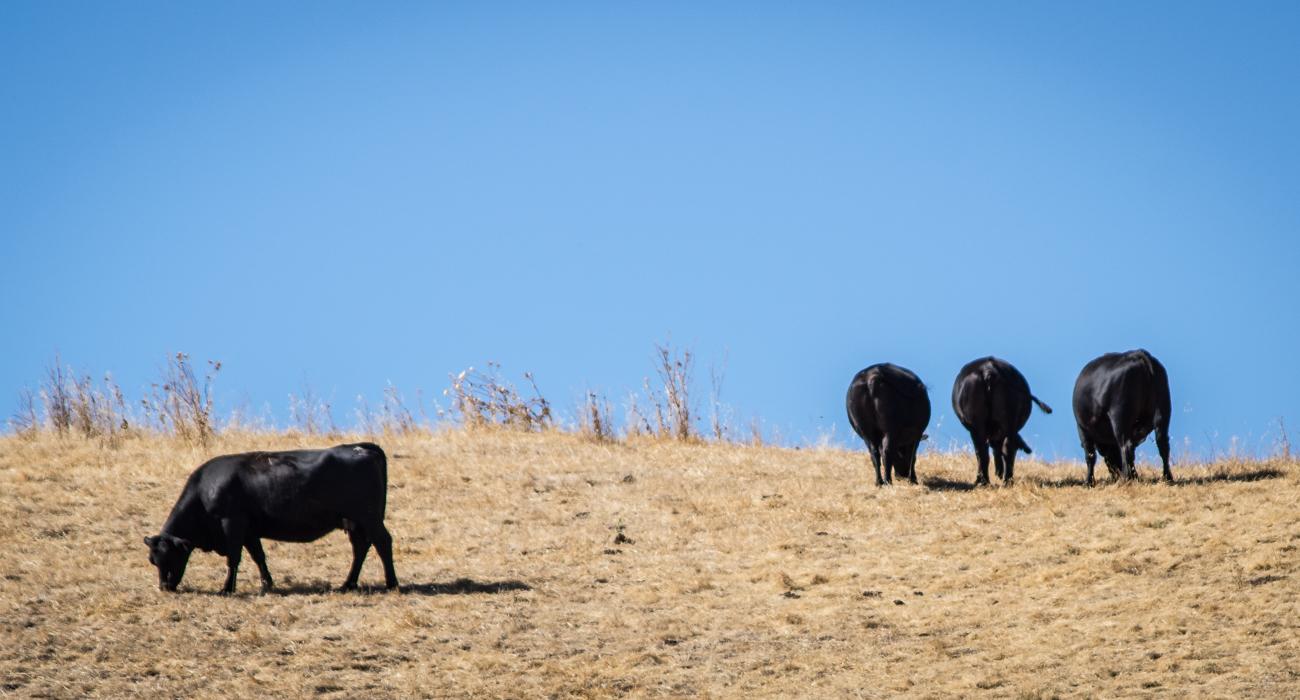 "photo ""Осень"" tags: landscape, humor, misc., четыре коровы ангус"